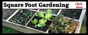 Sq Foot Gardening